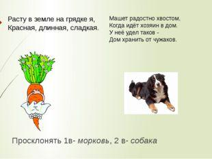 Просклонять 1в- морковь, 2 в- собака  Расту в земле на грядке я, Красная, дл