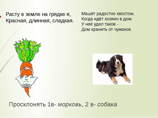 Просклонять 1в- морковь, 2 в- собака  Расту в земле на грядке я, Красная, дл...
