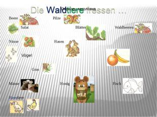 Beere Pilze Salat Blätter Waldbeeren Nüsse Hasen Vögel Obst Gras Mäuse Honig
