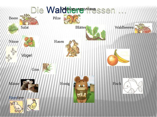 Beere Pilze Salat Blätter Waldbeeren Nüsse Hasen Vögel Obst Gras Mäuse Honig...