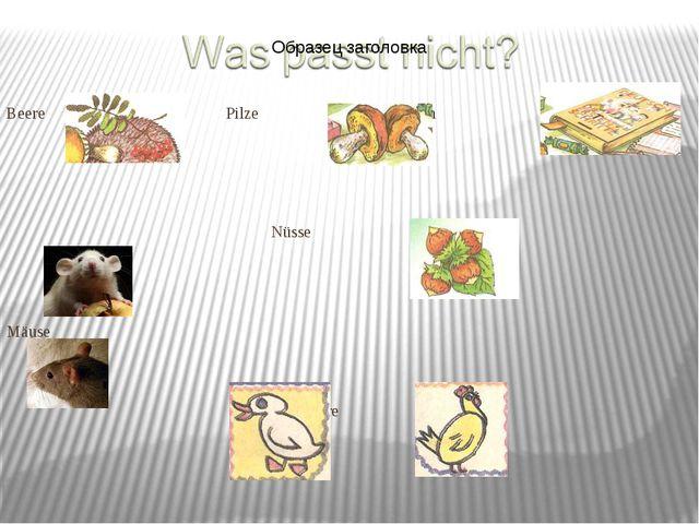 Beere Pilze Buch Nüsse Mäuse Haustiere