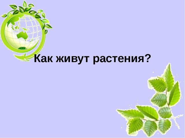 Как живут растения? Белозёрова Татьяна