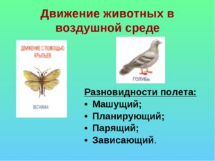 Движение животных в воздушной среде Разновидности полета: Машущий; Планирующи