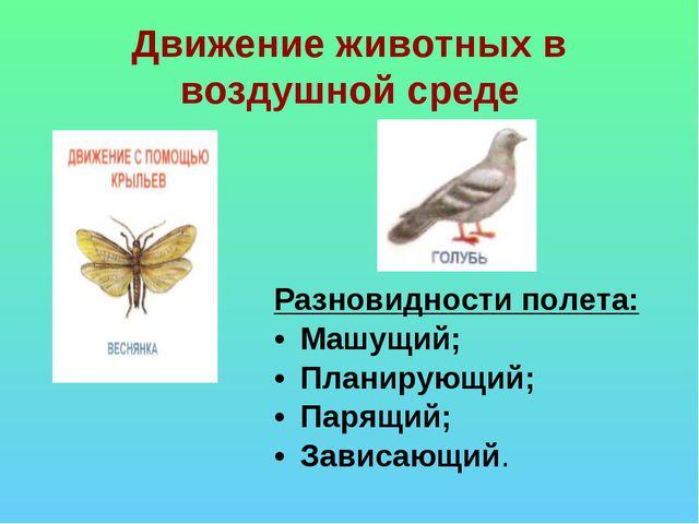 Движение животных в воздушной среде Разновидности полета: Машущий; Планирующи...