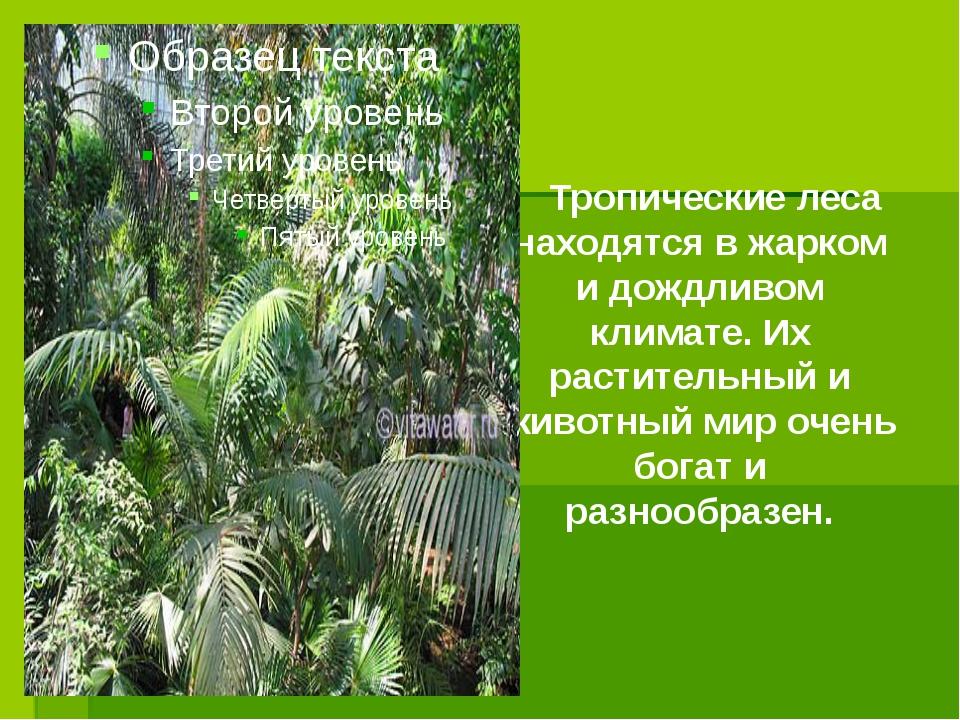 Тропические леса находятся в жарком и дождливом климате. Их растительный и ж...