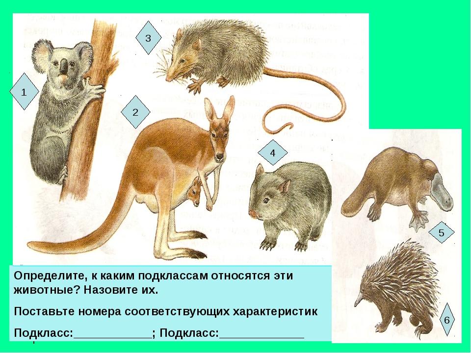 Опр Определите, к каким подклассам относятся эти животные? Назовите их. Поста...
