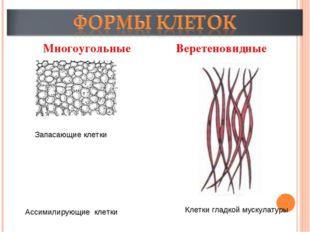 Многоугольные Веретеновидные Запасающие клетки Ассимилирующие клетки Клетки г