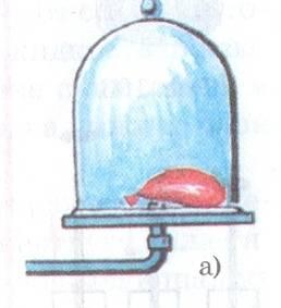 аскар5 048