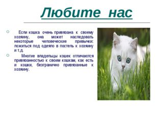 Любите нас Если кошка очень привязана к своему хозяину, она может наследовать