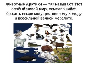 ЖивотныеАрктики— так называют этот особый живоймир, осмелившийся бросить в
