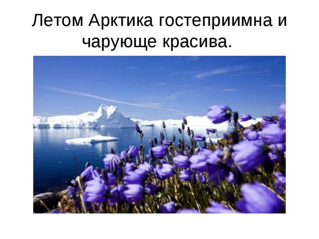 Летом Арктика гостеприимна и чарующе красива.