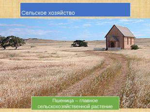 Сельское хозяйство Пшеница – главное сельскохозяйственной растение Овцеводств