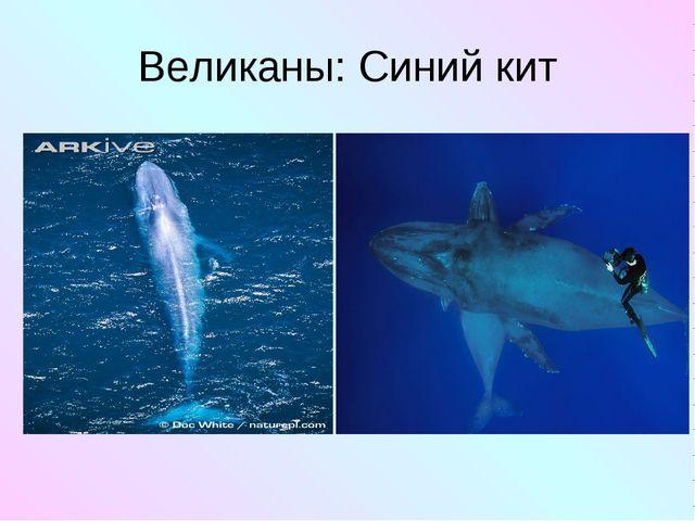 Великаны: Синий кит