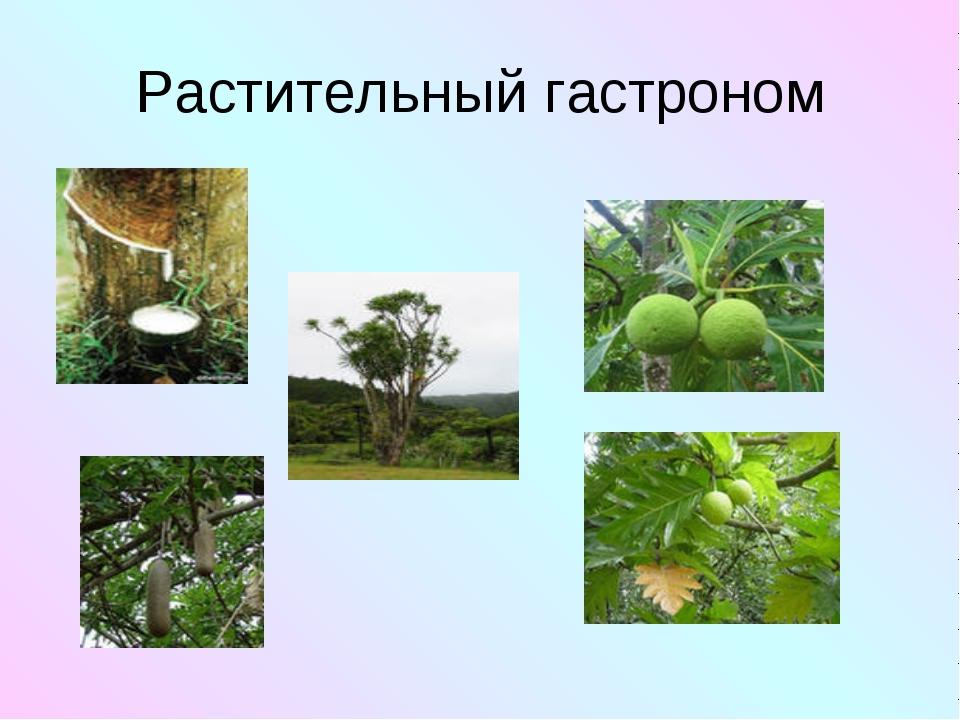 Растительный гастроном