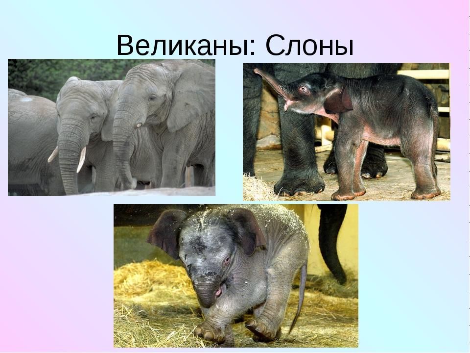 Великаны: Слоны