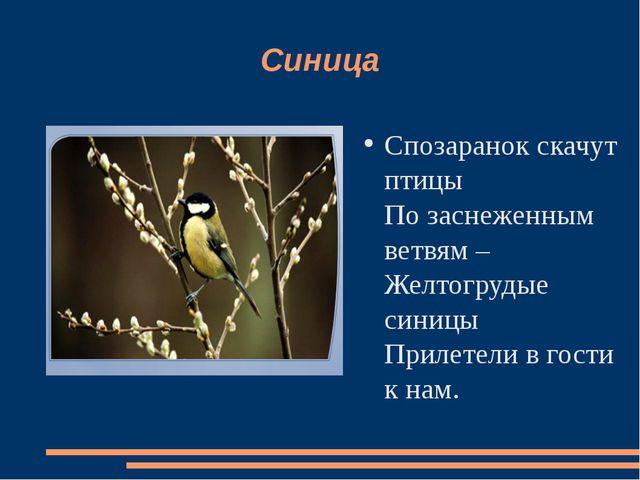 Синица Спозаранок скачут птицы По заснеженным ветвям – Желтогрудые синицы При...