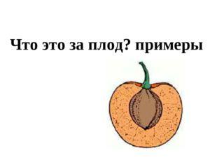 Что это за плод? примеры
