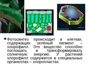 Фотосинтез происходит в клетках, содержащих зелёный пигмент – хлорофилл. Это
