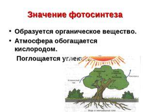 Значение фотосинтеза Образуется органическое вещество. Атмосфера обогащается