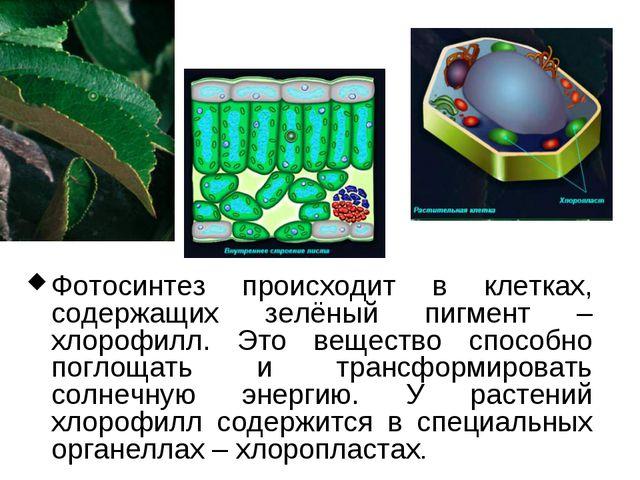 Фотосинтез происходит в клетках, содержащих зелёный пигмент – хлорофилл. Это...