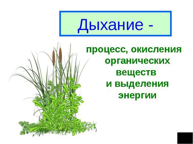 Дыхание - процесс, окисления органических веществ и выделения энергии