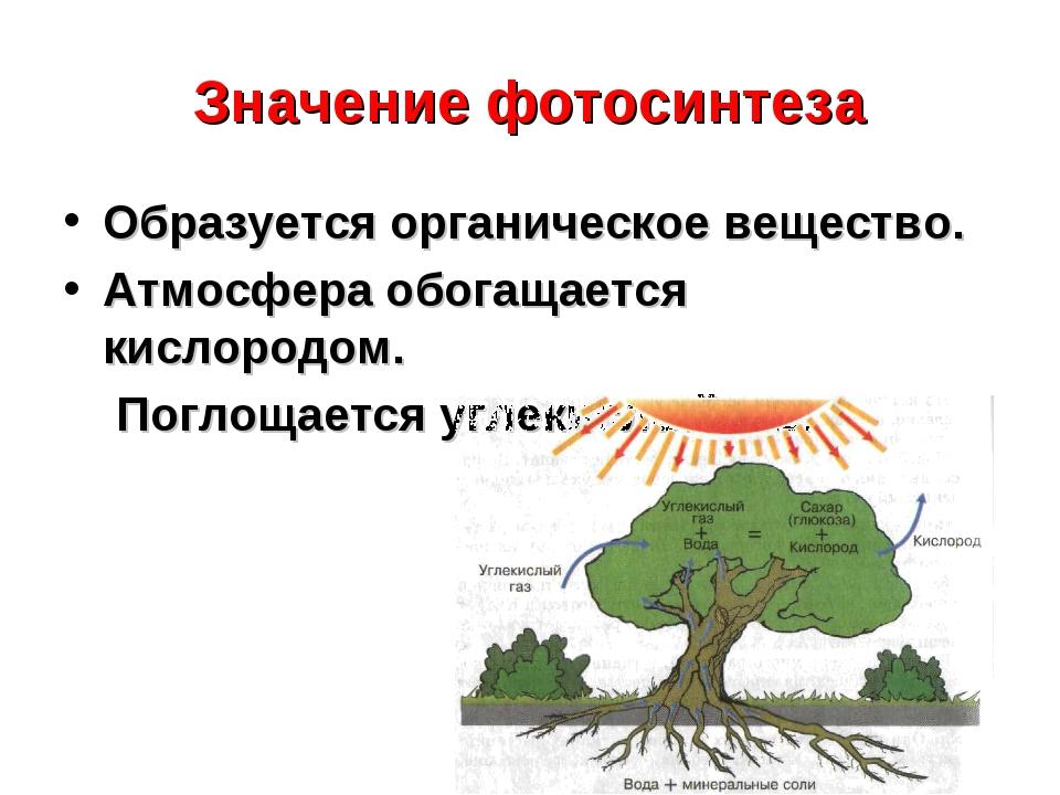 Значение фотосинтеза Образуется органическое вещество. Атмосфера обогащается...