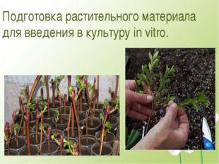 Подготовка растительного материала для введения в культуру in vitro.