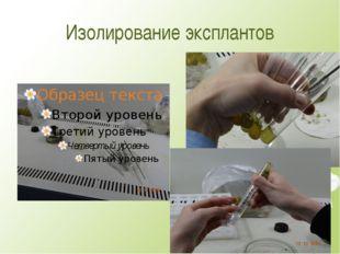 Изолирование эксплантов