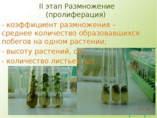 II этап Размножение (пролиферация) - коэффициент размножения – среднее количе