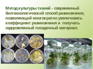 Метод культуры тканей - современный биотехнологический способ размножения, по