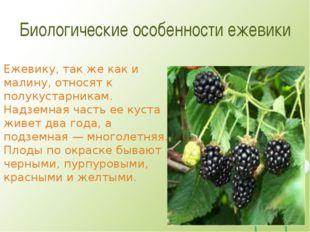 Биологические особенности ежевики Ежевику, так же как и малину, относят к пол