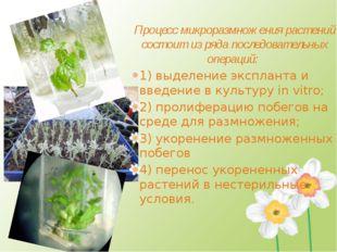 Процесс микроразмножения растений состоит из ряда последовательных операций: