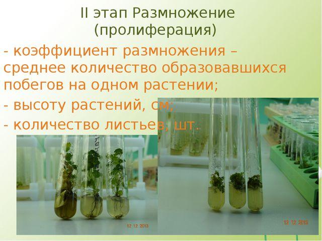 II этап Размножение (пролиферация) - коэффициент размножения – среднее количе...