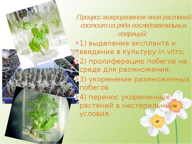 Процесс микроразмножения растений состоит из ряда последовательных операций:...