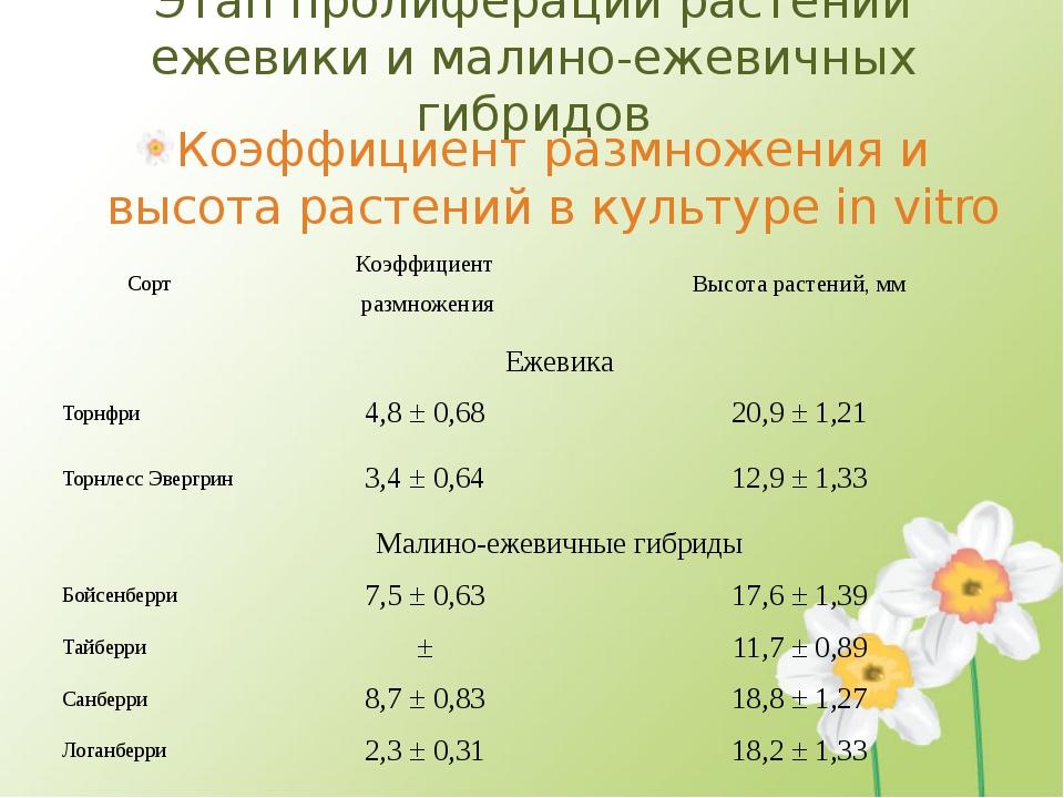 Этап пролиферации растений ежевики и малино-ежевичных гибридов Коэффициент ра...