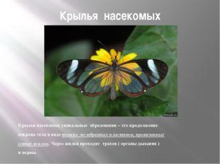 Крылья насекомых Крылья насекомых уникальные образования – это продолжение по