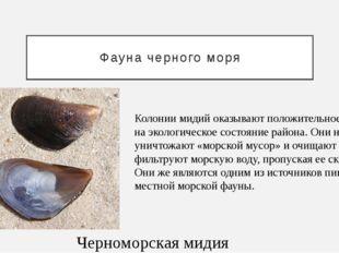 Фауна черного моря Черноморская мидия Колонии мидий оказывают положительное в
