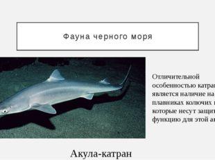 Фауна черного моря Акула-катран Отличительной особенностью катрана является н