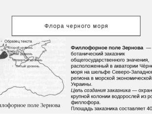 Флора черного моря Филлофорное поле Зернова Филлофорное поле Зернова— ботан
