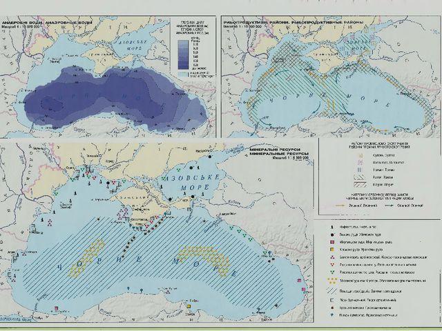 Фауна черного моря
