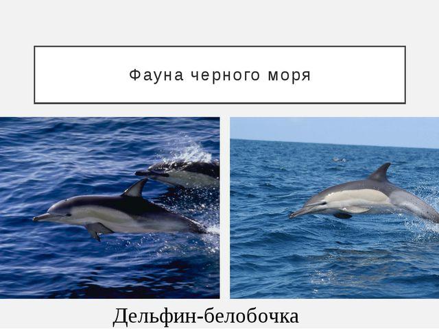 Фауна черного моря Дельфин-белобочка