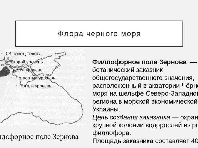Флора черного моря Филлофорное поле Зернова Филлофорное поле Зернова— ботан...