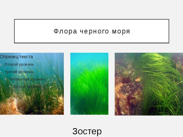 Флора черного моря Зостера