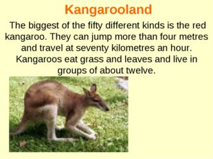 Kangarooland The biggest of the fifty different kinds is the red kangaroo. T