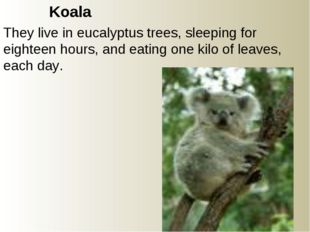 Koala They live in eucalyptus trees, sleeping for eighteen hours, and eating