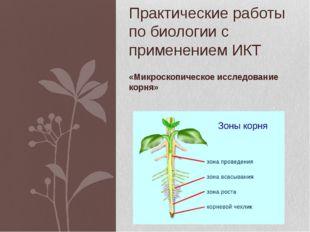 «Микроскопическое исследование корня» Практические работы по биологии с приме