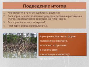 Подведение итогов Корни растут в течение всей жизни растения. Рост корня осущ