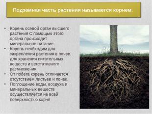 Корень осевой орган высшего растения С помощью этого органа происходит минера