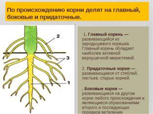 По происхождению корни делят на главный, боковые и придаточные.  1. Главный