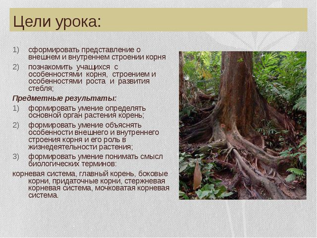 Цели урока: сформировать представление о внешнем и внутреннем строении корня...